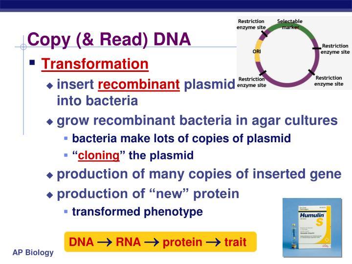 Copy (& Read) DNA