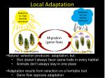 local adaptation