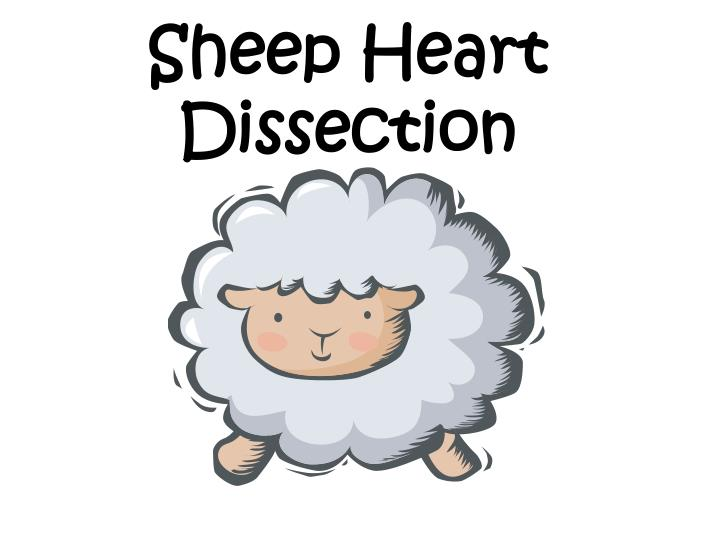 sheep heart dissection n.