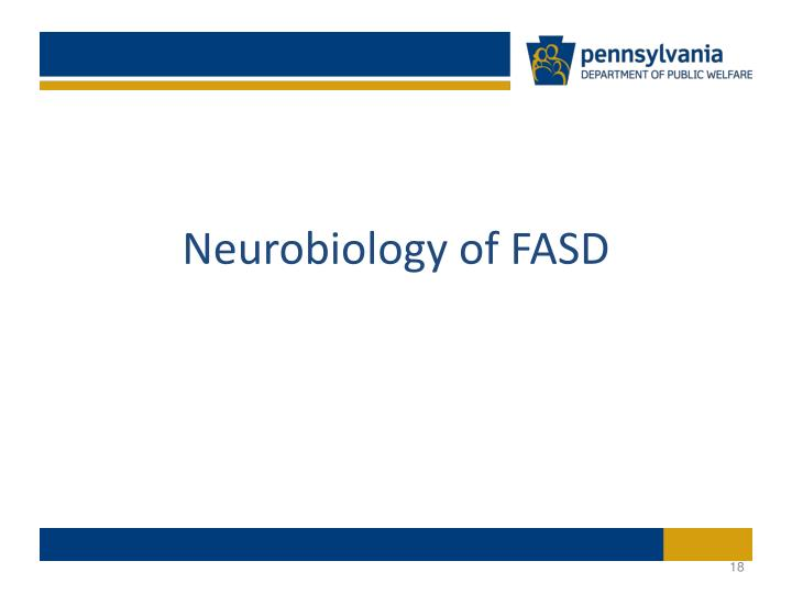 Neurobiology of FASD