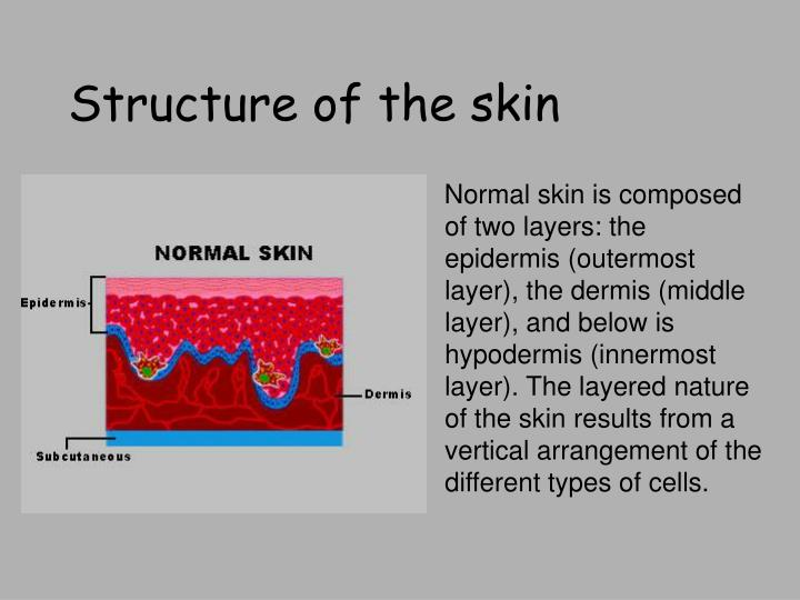 Ppt Integumentary System Powerpoint Presentation Id5805288