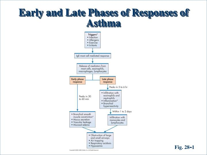 Early and Late Phases of Responses of Asthma