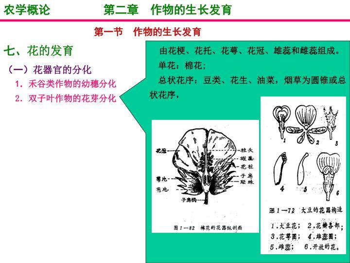 农学概论         第二章  作物的生长发育