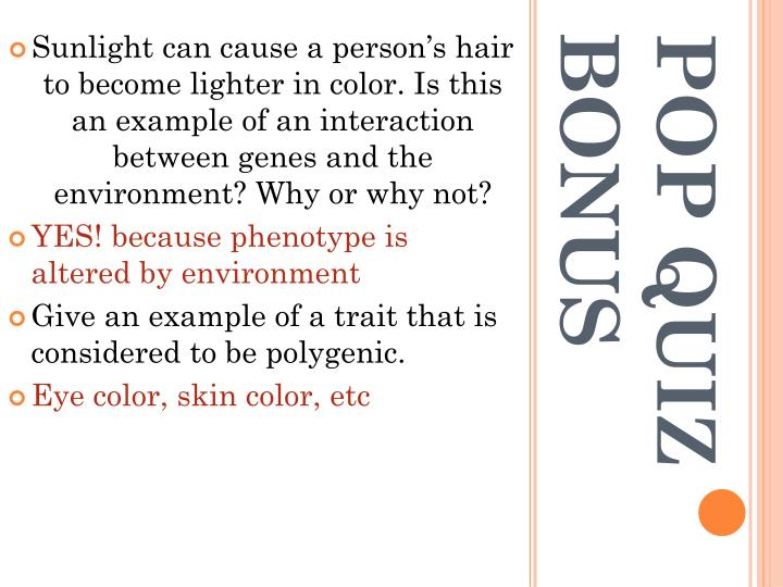 Sunlight can cause a person's hair to become lighter in color. Is this an example of an interaction between genes and the environment? Why or why not?