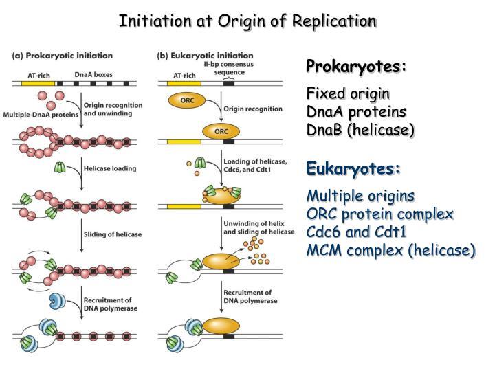 Initiation at Origin of Replication