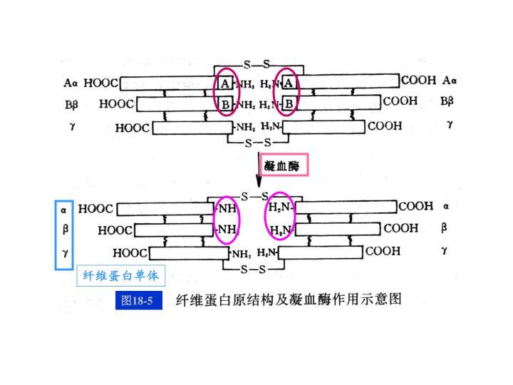 纤维蛋白原