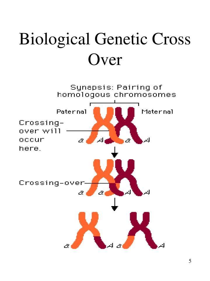 Biological Genetic Cross Over