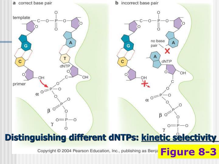 Distinguishing different dNTPs: