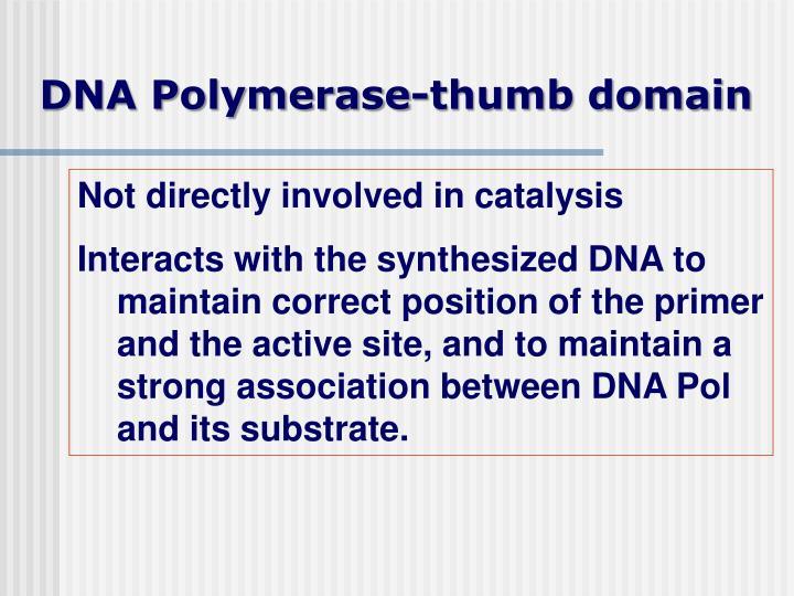 DNA Polymerase-thumb domain