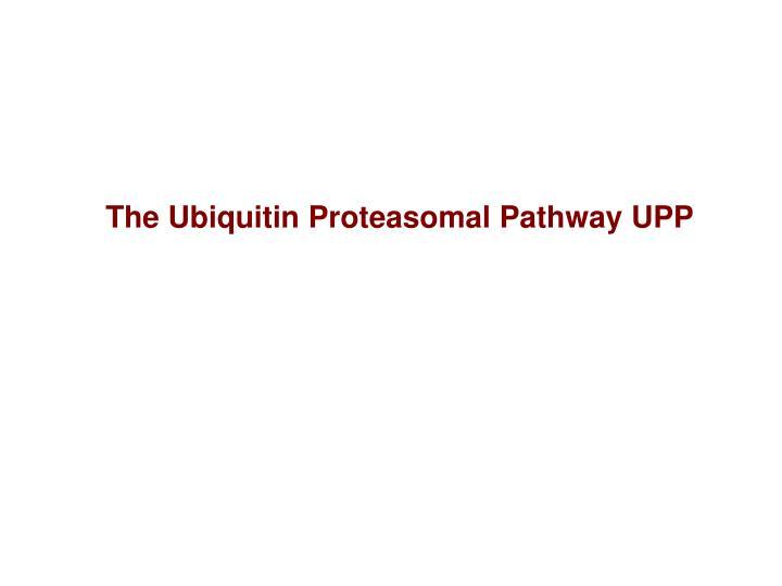 The Ubiquitin Proteasomal Pathway UPP