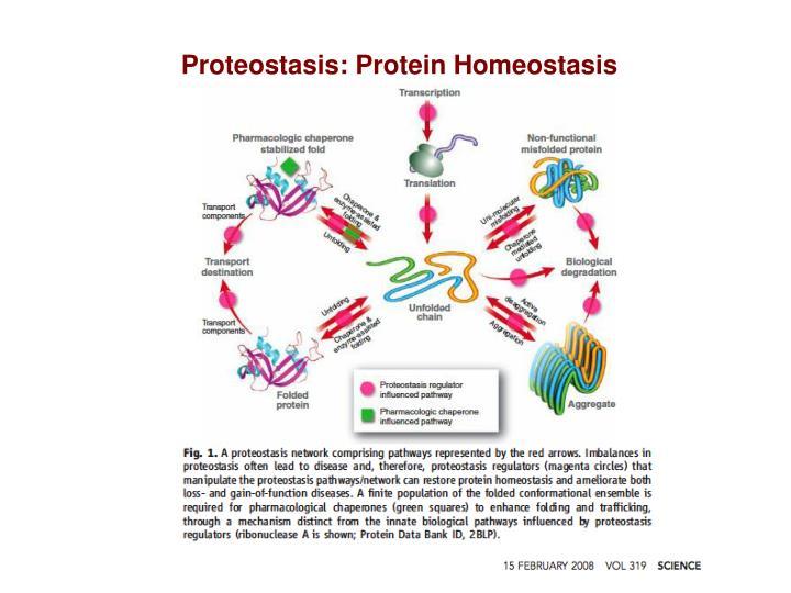 Proteostasis: Protein Homeostasis