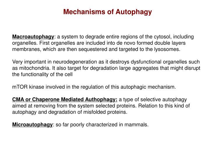 Mechanisms of Autophagy