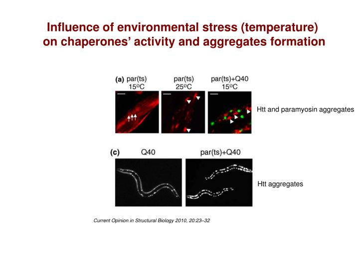 Influence of environmental stress (temperature)