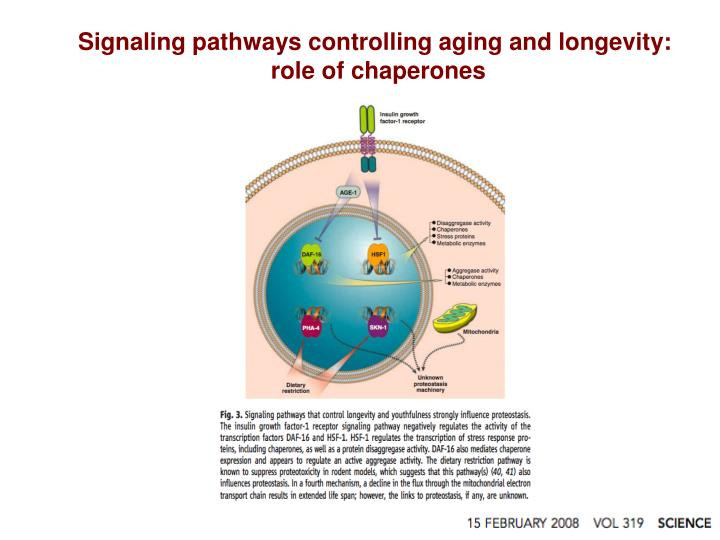 Signaling pathways controlling aging and longevity: