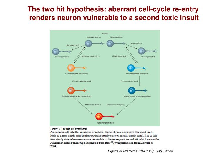The two hit hypothesis: aberrant cell-cycle re-entry