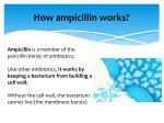 how ampicillin works
