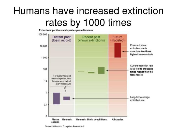 Humans have increased extinction rates by 1000 times