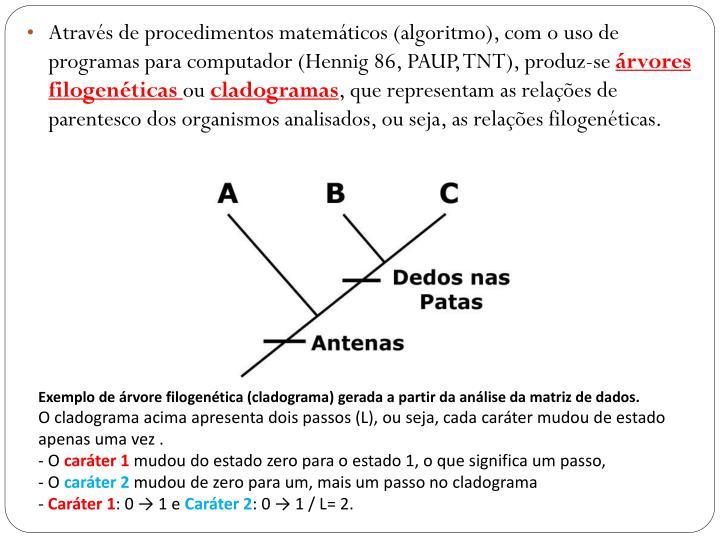 Através de procedimentos matemáticos (algoritmo), com o uso de programas para computador (Hennig 86, PAUP, TNT), produz-se