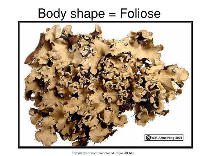 Body shape = Foliose
