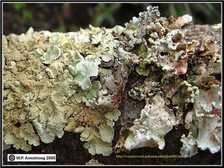 http://waynesword.palomar.edu/pljan98f.htm