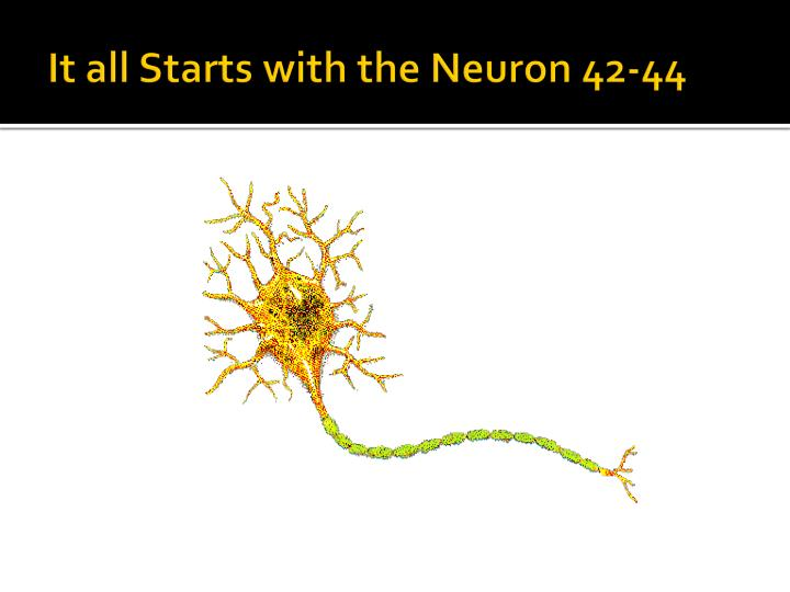 It all starts with the neuron 42 44