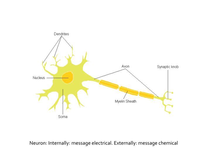 Neuron: Internally: message electrical. Externally: message chemical