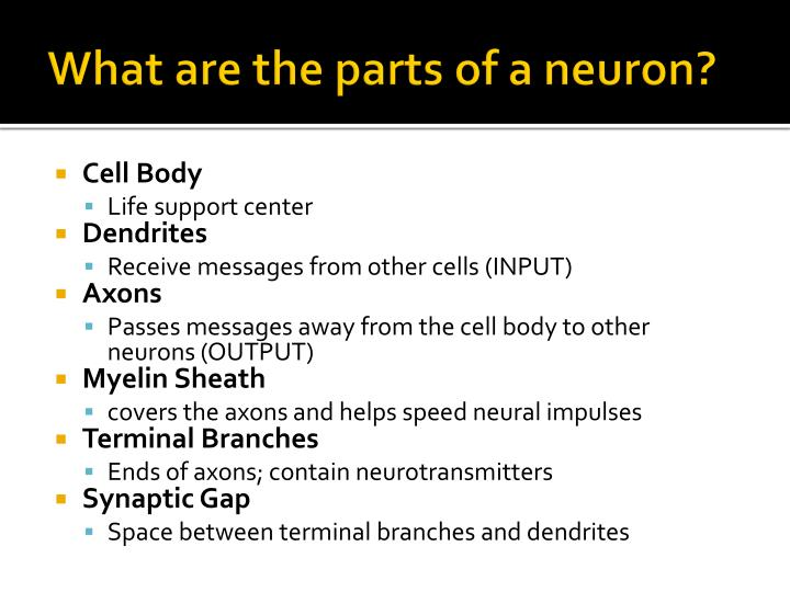 What are the parts of a neuron?
