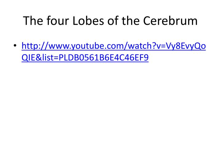 The four Lobes of the Cerebrum
