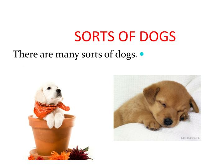 sorts of dogs n.
