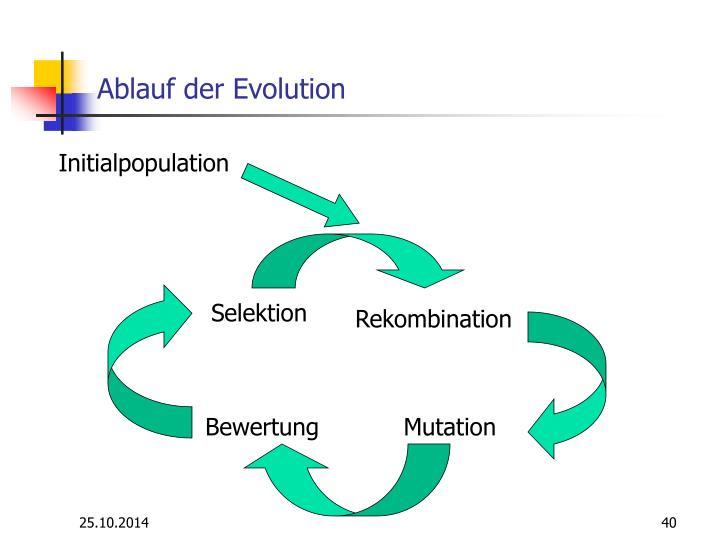 Ablauf der Evolution
