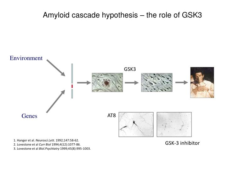amyloid cascade hypothesis the role of gsk3 n.