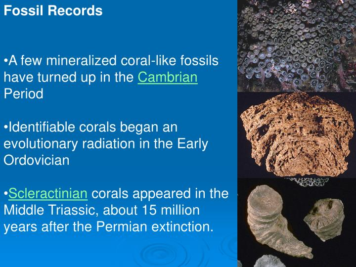 Fossil Records