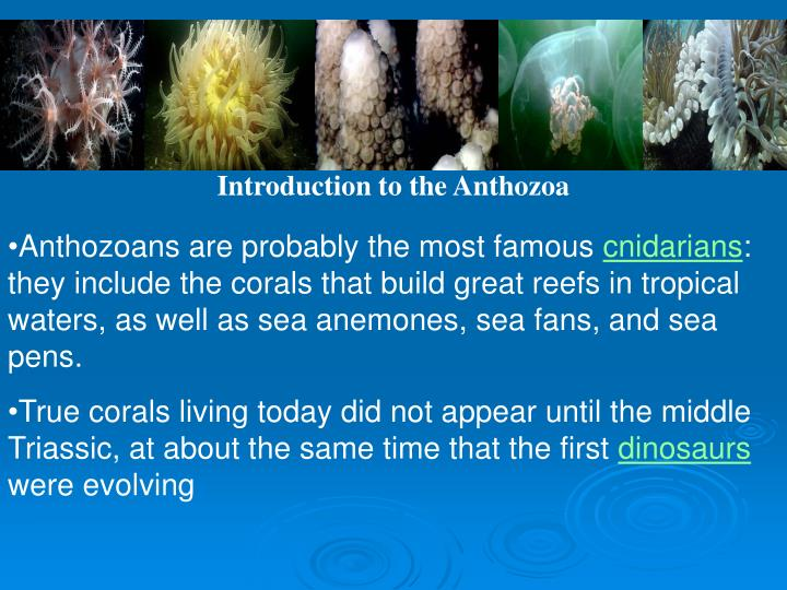 Introduction to the Anthozoa