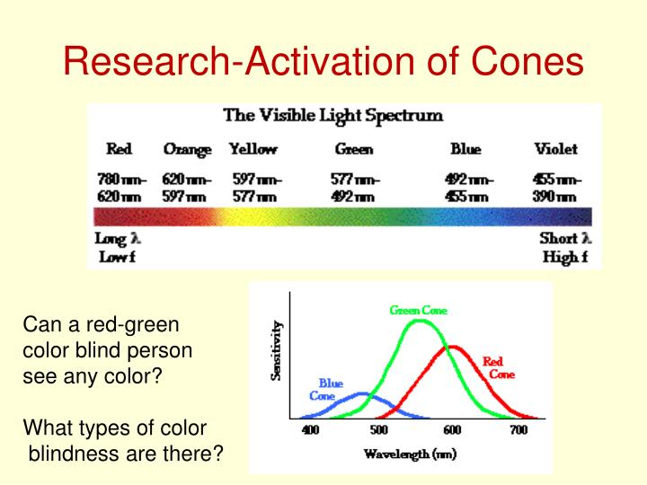 Research-Activation of Cones