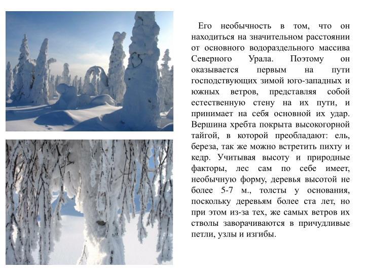 Его необычность в том, что он находиться на значительном расстоянии от основного водораздельного массива Северного Урала. Поэтому он оказывается первым на пути господствующих зимой юго-западных и южных ветров, представляя собой естественную стену на их пути, и  принимает на себя основной их удар. Вершина хребта покрыта высокогорной тайгой, в которой преобладают: ель, береза, так же можно встретить пихту и кедр. Учитывая высоту и природные факторы, лес сам по себе имеет, необычную форму, деревья высотой не более 5-7 м., толсты у основания, поскольку деревьям более ста лет, но при этом из-за тех, же самых ветров их стволы заворачиваются в причудливые петли, узлы и изгибы.