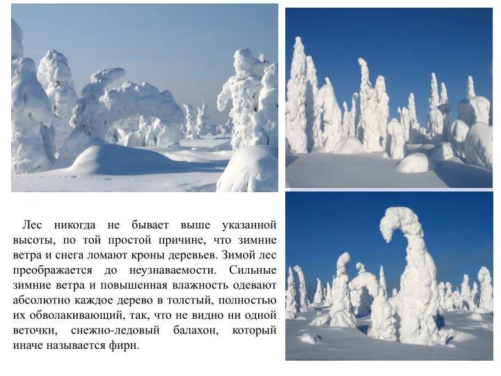 Лес никогда не бывает выше указанной высоты, по той простой причине, что зимние ветра и снега ломают кроны деревьев. Зимой лес преображается до неузнаваемости. Сильные зимние ветра и повышенная влажность одевают абсолютно каждое дерево в толстый, полностью их обволакивающий, так, что не видно ни одной веточки, снежно-ледовый балахон, который иначе называется фирн.