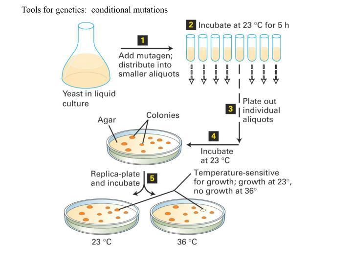 Tools for genetics:  conditional mutations