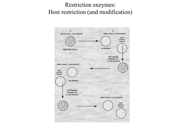 Restriction enzymes: