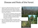 disease and pests of the forest