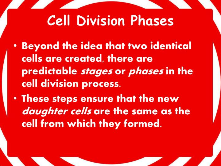 Cell Division Phases