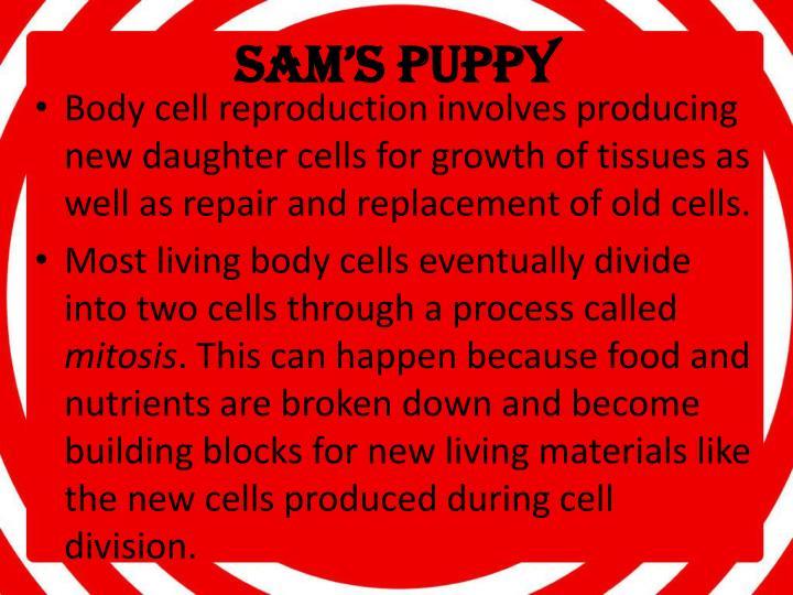 Sam s puppy