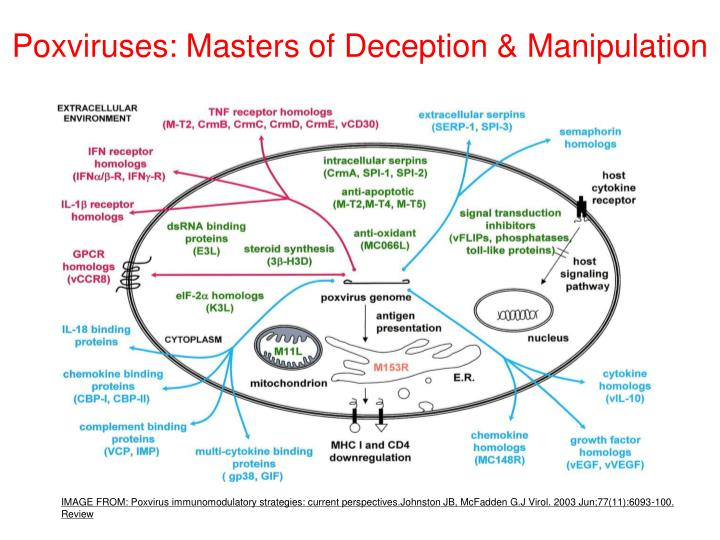 Poxviruses: Masters of Deception & Manipulation