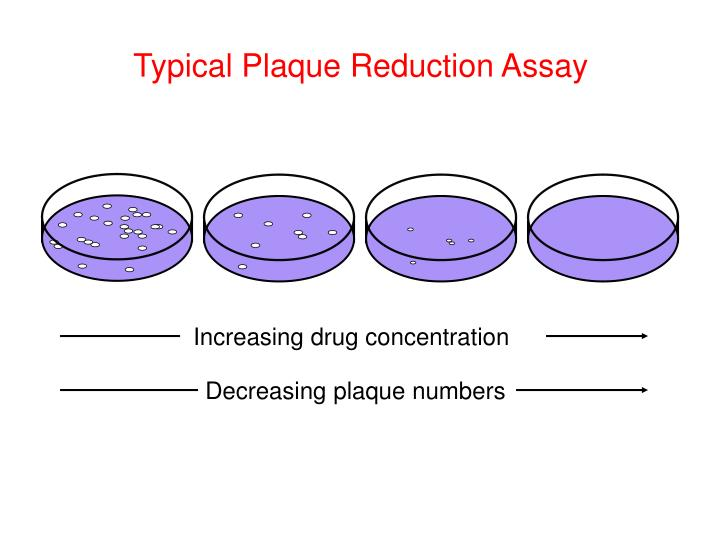 Typical Plaque Reduction Assay