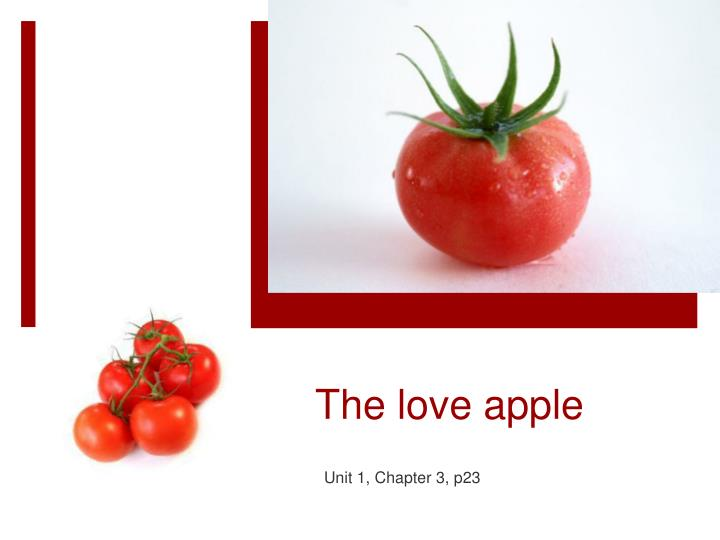 the love apple n.