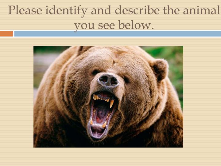 please identify and describe the animal you see below n.