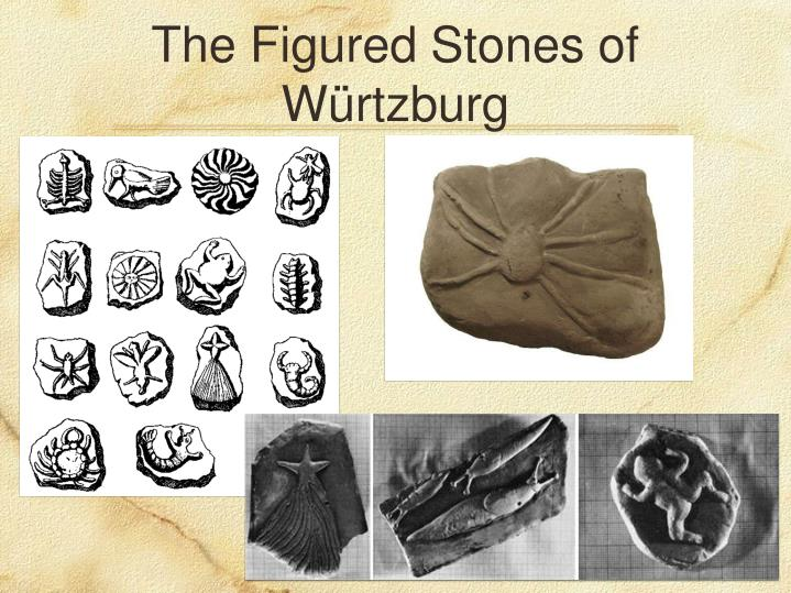 The Figured Stones of Würtzburg