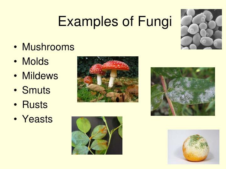 Ppt Mushrooms Powerpoint Presentation Id5836874