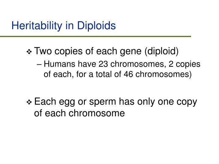 Heritability in Diploids