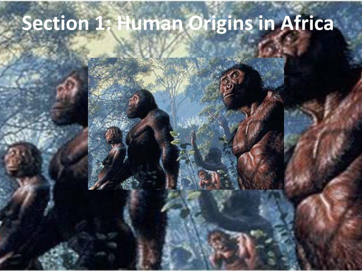Section 1 human origins in africa