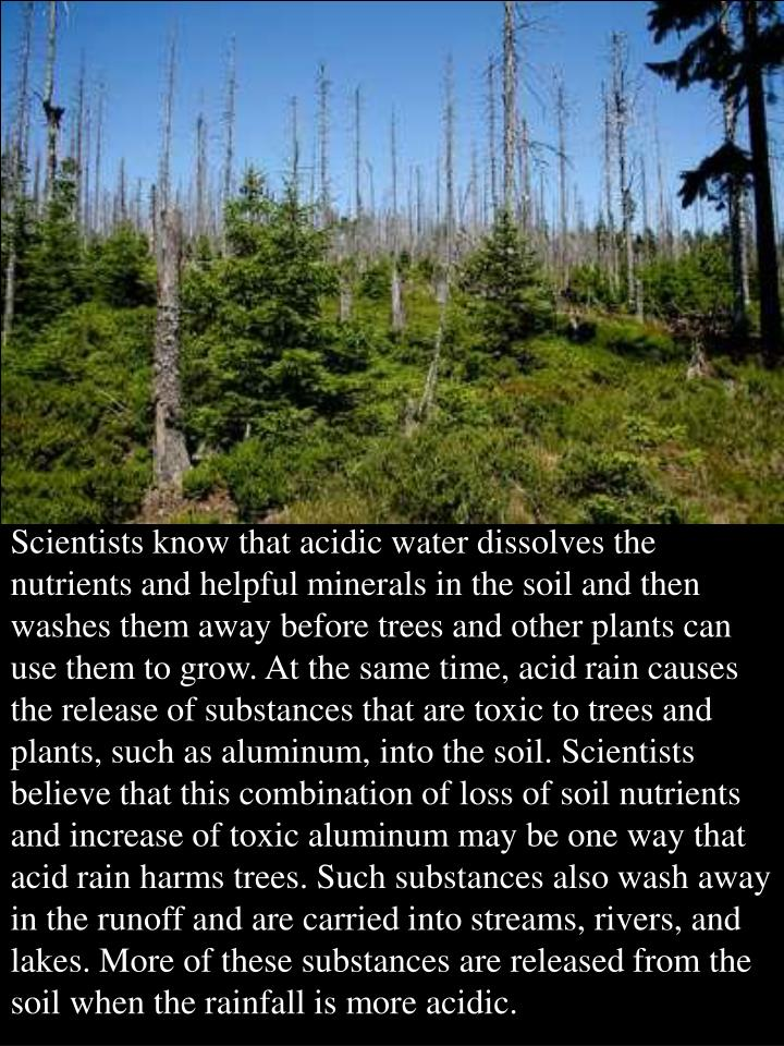 Scientists know that acidic water dissolves the nutrients and helpful minerals in the soil and then washes them away before trees and other plants can use them to grow. At the same time, acid rain causes the release of substances that are toxic to trees and plants, such as aluminum, into the soil. Scientists believe that this combination of loss of soil nutrients and increase of toxic aluminum may be one way that acid rain harms trees. Such substances also wash away in the runoff and are carried into streams, rivers, and lakes. More of these substances are released from the soil when the rainfall is more acidic.
